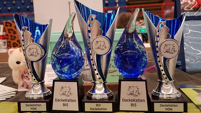 awardsdackekatt_174515