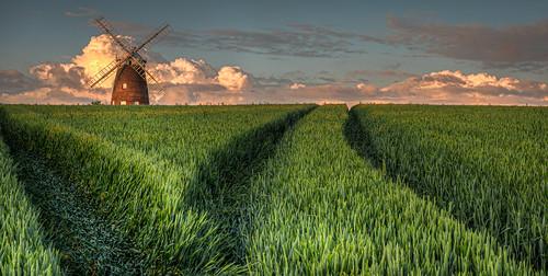 wheat thaxted uttlesford landscape sunset crop england windmill johnwebbswindmill johnwebbwindmill places uk