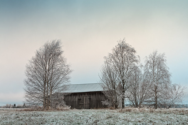 Old Wooden Barn Surrounded By Trees
