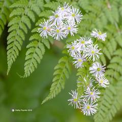 Bloom 9716