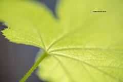 Leaf 9694