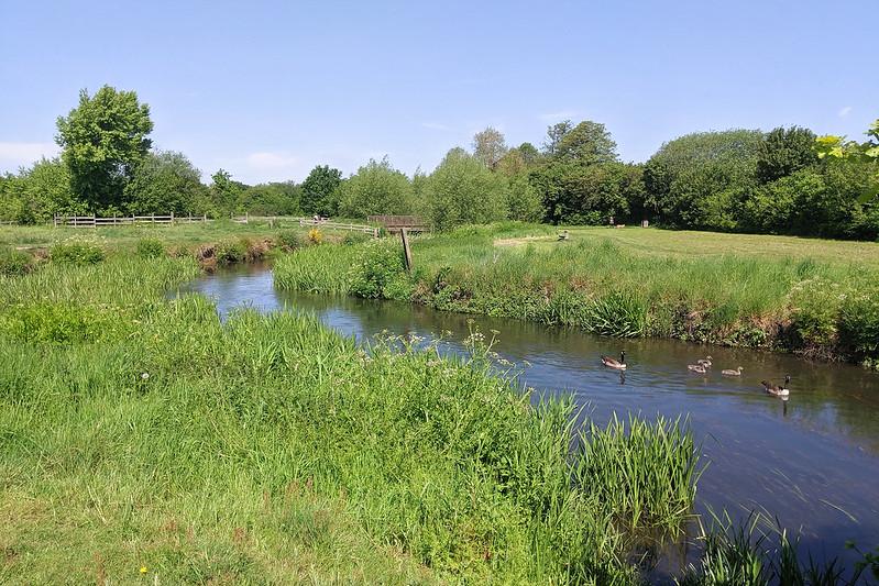 Shepherd's Meadow, 23 May 2019