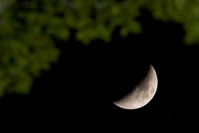 Crescent Moon under a tree branch