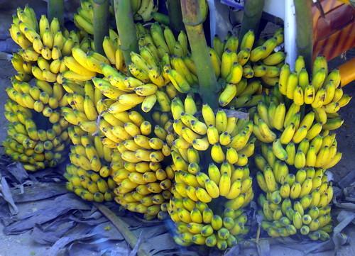 tamil nadu bananas