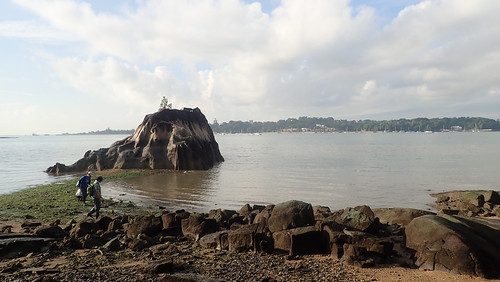 Living shores of Pulau Ubin
