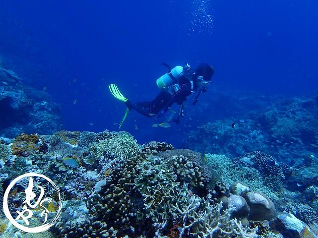 珊瑚が好きになった!!と言ってくださりました♡