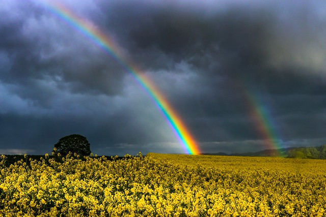 Looking for the Rainbow