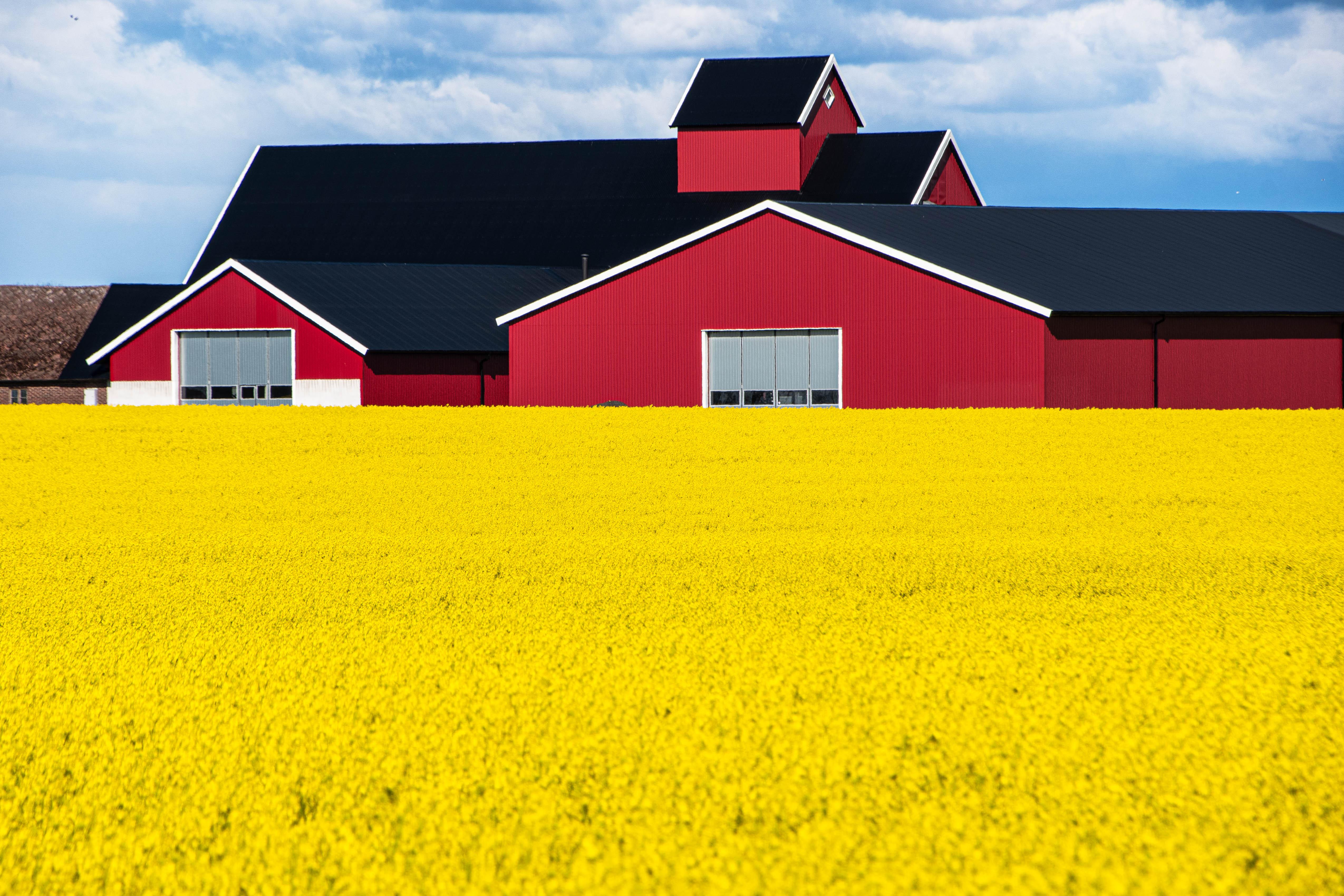 Summer colors in SW Sweden.jpg