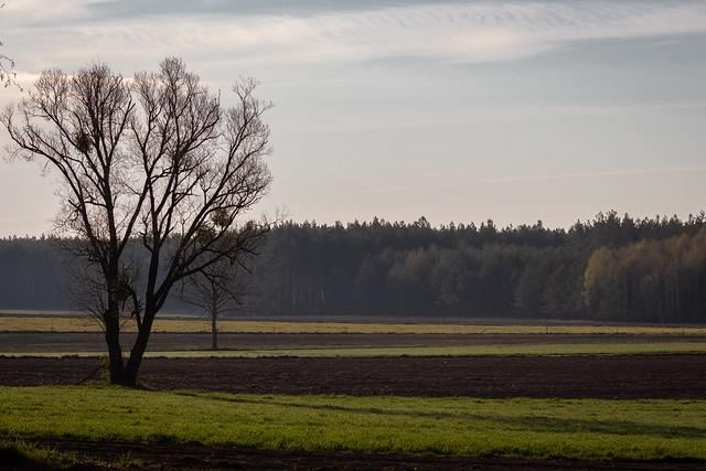 Morgenstimmung in Wiejki