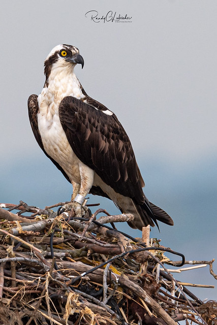 Osprey of the Jersey Shore | 2019 - 13
