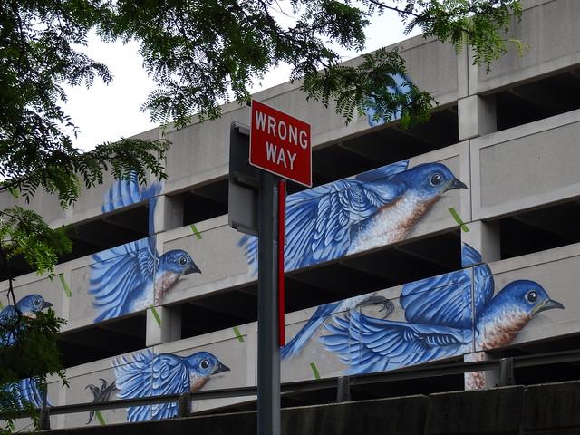Eastern Blue Birds mural