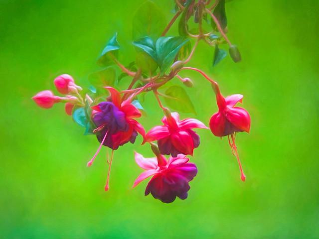 Brilliant Fuchsia