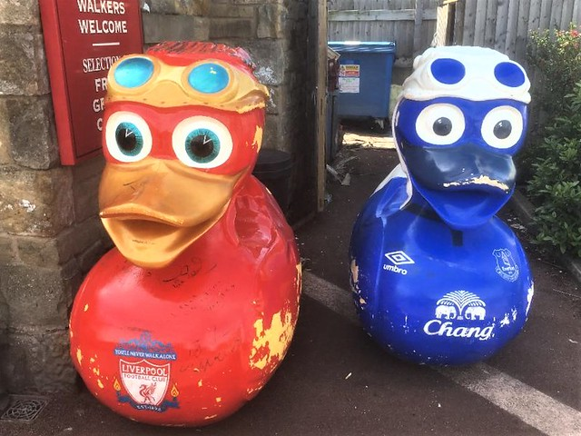 MASSIVE Everton and Liverpool Football Club ducks at the Canal Turn Public House, Carnforth, Lancashire = NOW THATS WHAT YOU CALL A DUCK RACE. !!!!!!!