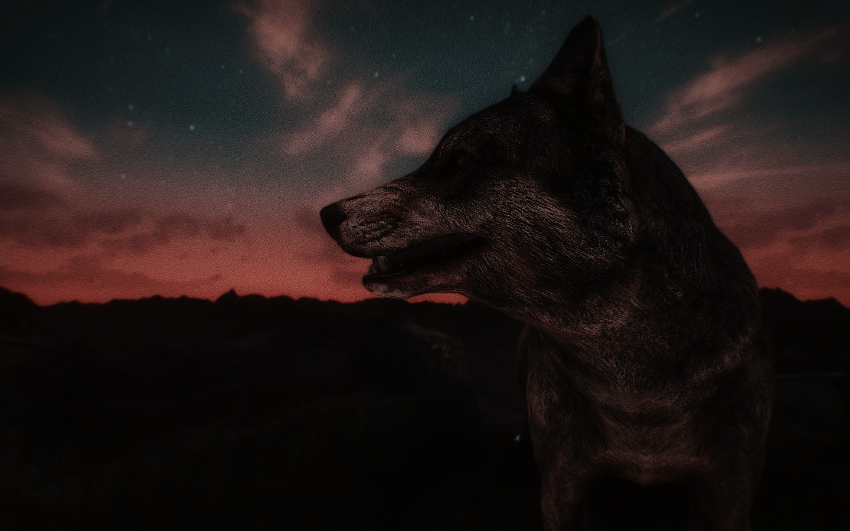 Fallout Screenshots XIII - Page 43 48031500942_8b77f71538_o