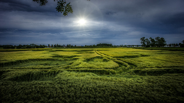 mysterious patterns in fields crop up overnight