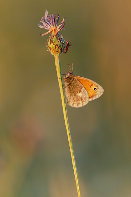 Ant vs. Butterfly