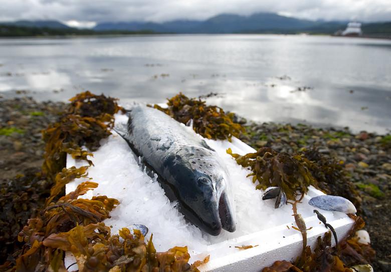 鮭魚養殖場。Scottish Salmon Producers' Organisation(CC BY-NC-ND 2.0)