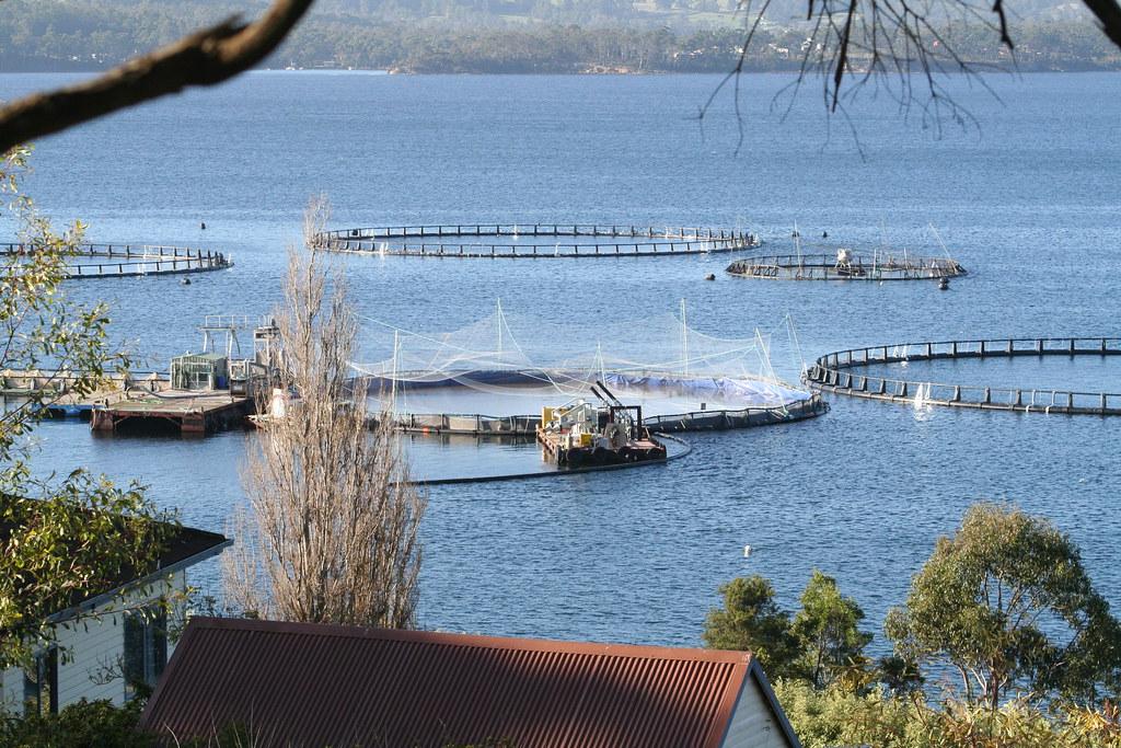 鮭魚養殖場。rod cuthbert(CC BY-NC-ND 2.0)