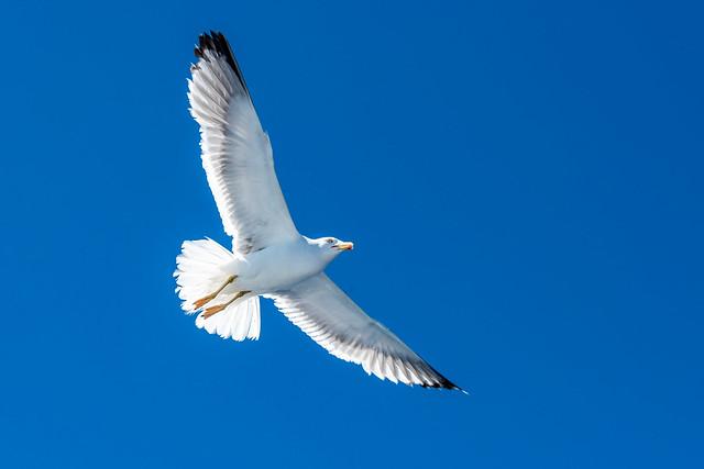 In flight - Mallorca - 0516