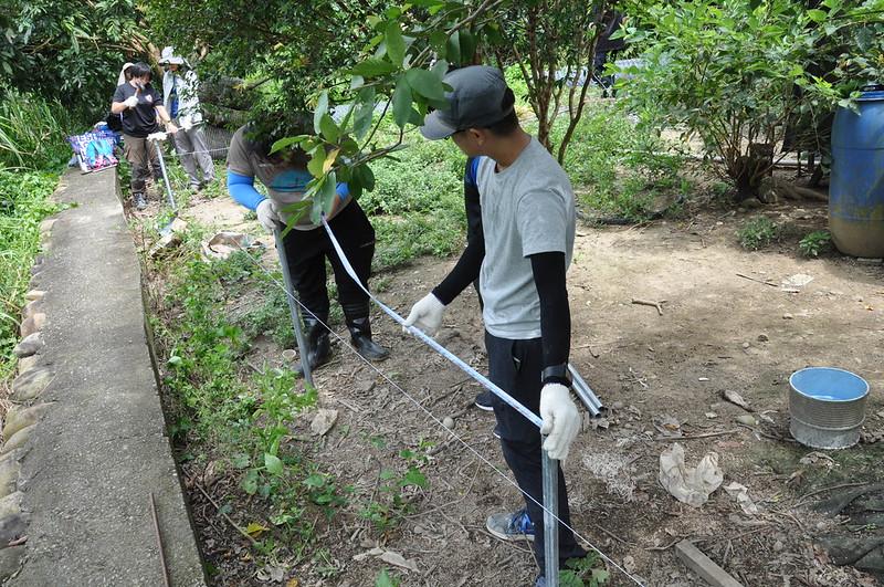 搭建雞舍的第一步先利用皮尺與水線測量短鐵樁與短鐵樁間的距離。孫文臨攝