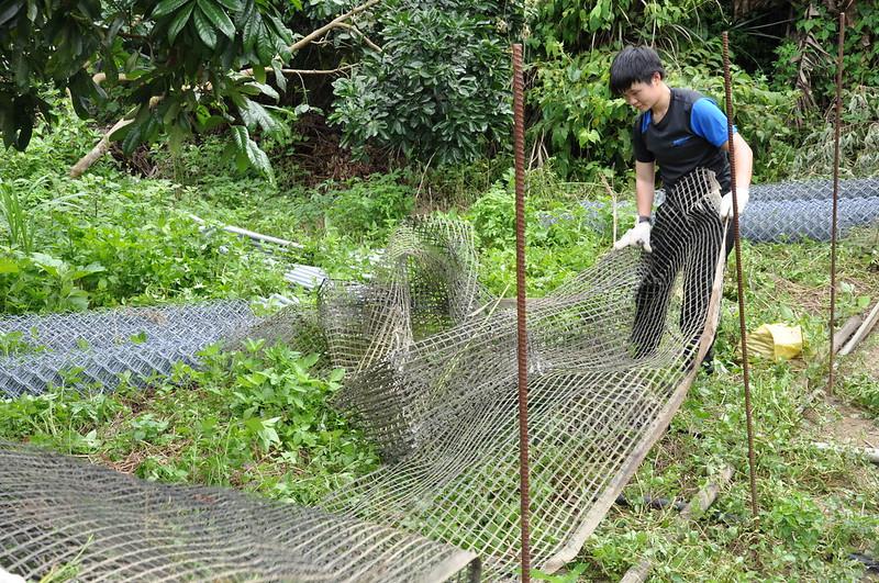 搭建新雞舍以前,需先將舊有的圍籬拆除。孫文臨攝