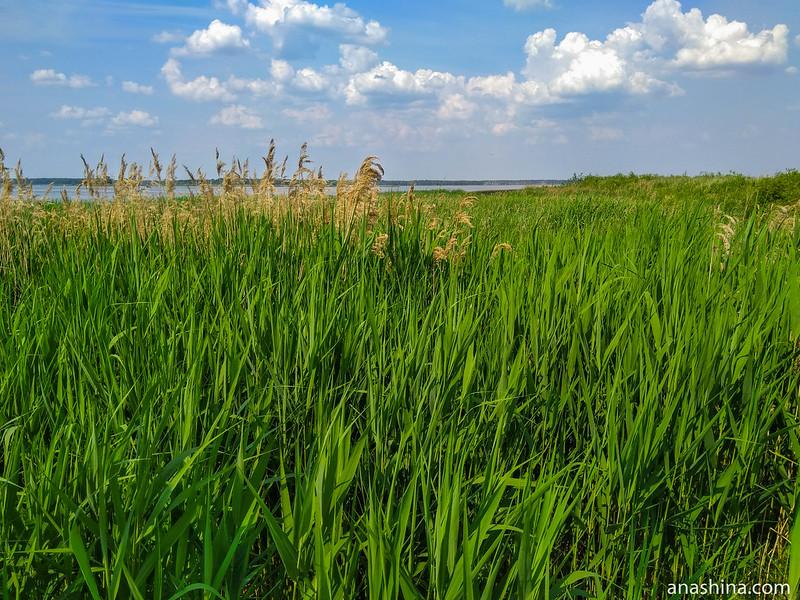 Заросшие берега, Иваньковское водохранилище