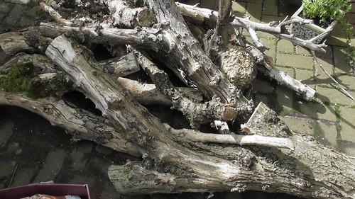 firewood June 19 1