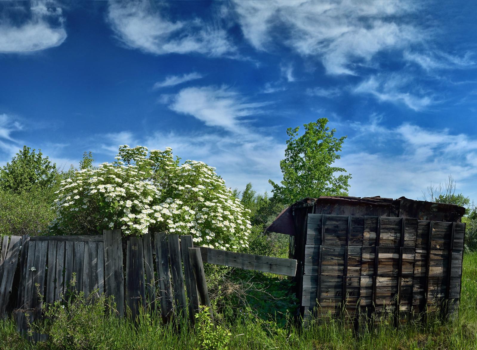 цветёт калина - фотограф Челябинск