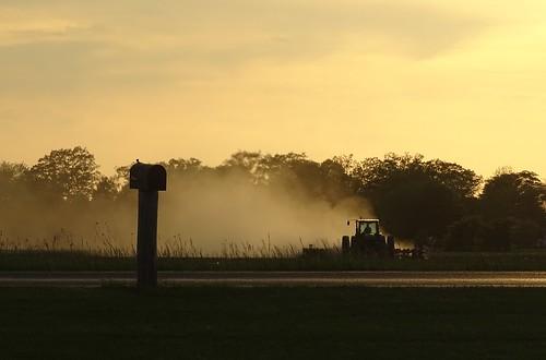 Planting at sunset.