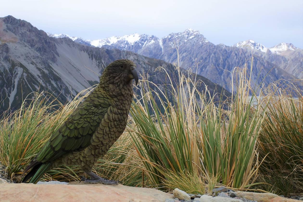 ニュージーランドのオウム・ケア