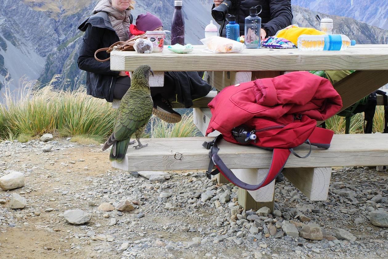 セアリーターンズにいたニュージーランドのオウム・ケア