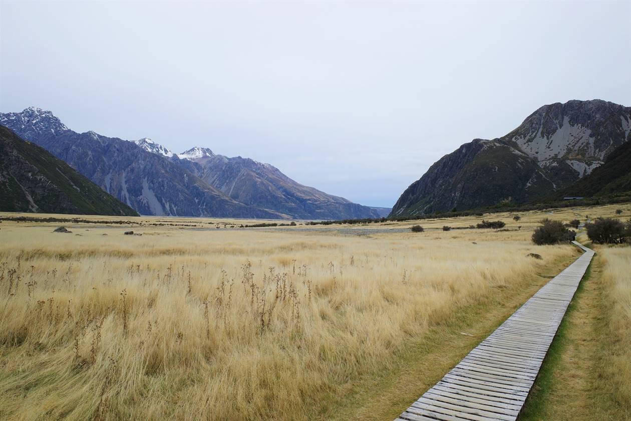 マウントクック 草原と山岳風景