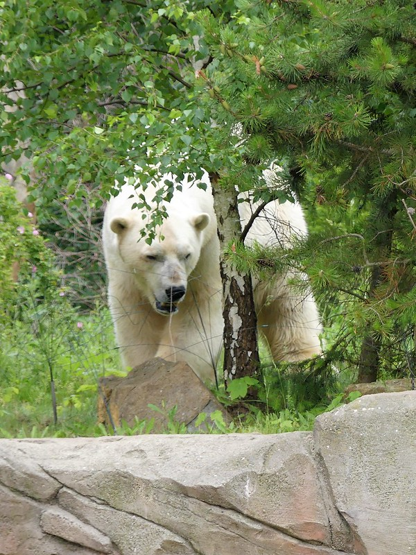 Zoo Hannover