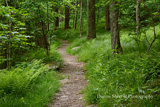 From a walk on the Woods Walk Trail at Grandfather Mountain