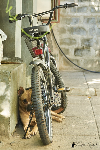 nikond7200 nikonmbd15 sigma1750mmf28exdcoshsm blackrapidrssportversion2 smallrigshoulderbag2208 peakdesignanchorlinksv4 andoerqr60 hoodmanhoodeyeheyensgeyepiece phaseonecaptureonepro bw blackandwhite bicycle bike object dog animal colors color flickr fun street alcala pangasinan philippines