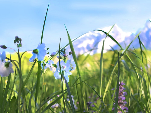spring macro grass flowers meadow mountains sky marzoll badreichenhall bayern bokeh