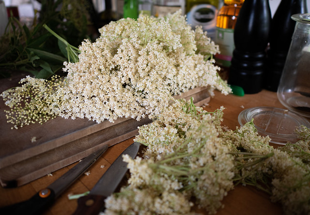 In search of the perfect elderflower drink (4)