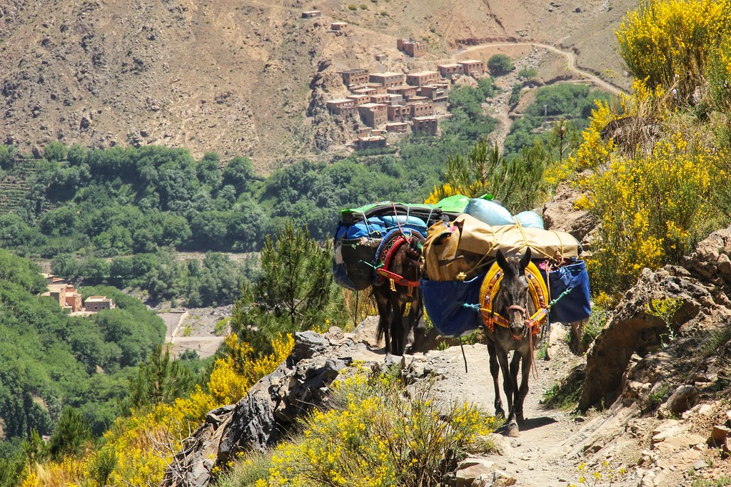 Our mules following us out of Imlil, Mount Toubkal Trek