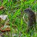 """Something is happening,"" Squirrel, Liwonde Park Reserve, Malawi, Africa"