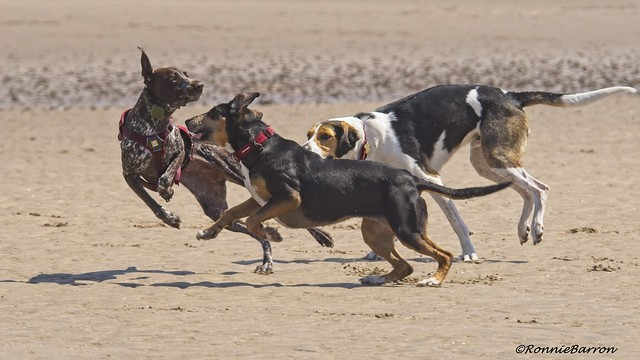 fast action canine fun