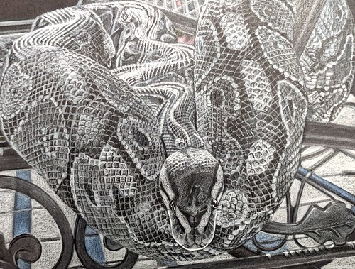 """""""Black and White Snake:Closeup"""" By Diane Betz Granger  Advanced Photo credit: Sally Robertson  I thought a closeup version of my original entry might be easier to see. Prismacolors on black pastel paper."""