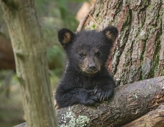 Picture of Innocence-Cades Cove, TN