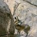 """<p><a href=""""https://www.flickr.com/people/jl7561/"""">jl7561</a> posted a photo:</p>  <p><a href=""""https://www.flickr.com/photos/jl7561/48040832461/"""" title=""""klipspringers nuzzling""""><img src=""""https://live.staticflickr.com/65535/48040832461_c361530d65_m.jpg"""" width=""""160"""" height=""""240"""" alt=""""klipspringers nuzzling"""" /></a></p>  <p>Dallas Zoo</p>"""