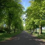 Haslam Park path
