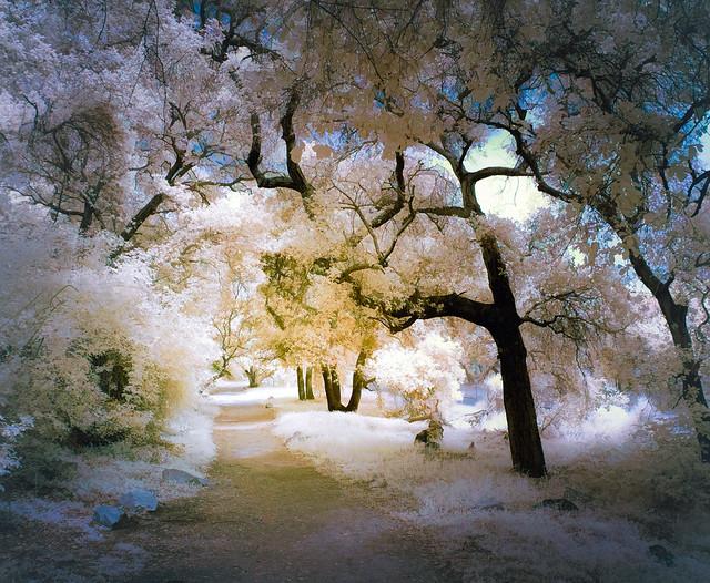 Spectral Oaks - Textured IR Pentatone