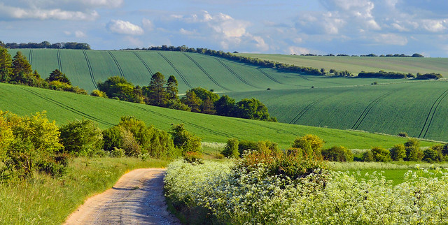 An evening stroll, Farnborough, Berkshire, England