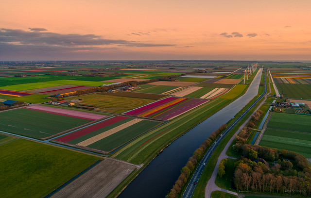 Rectangular Holland.