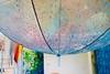 161/365: purpl(ish) rain