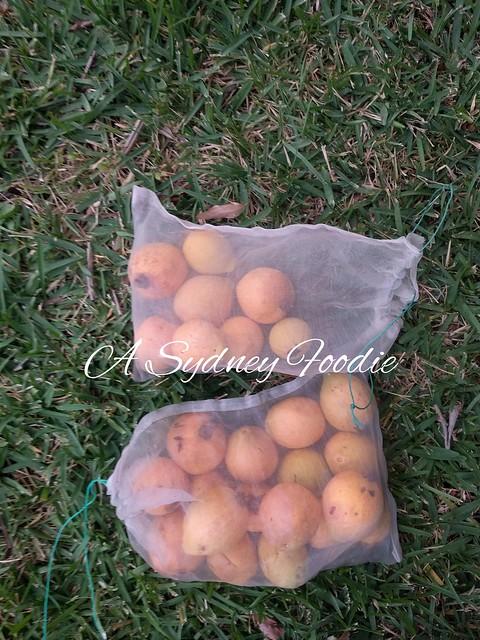guavas 2019