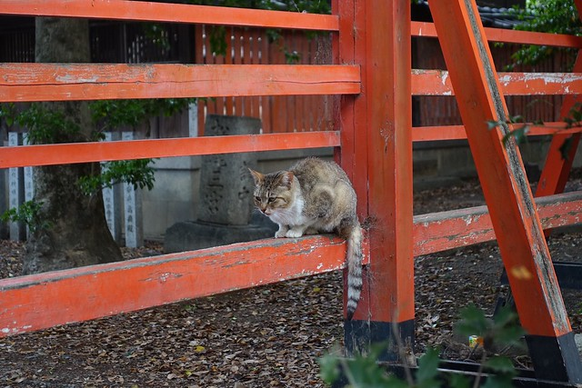 Today's Cat@2019-06-11